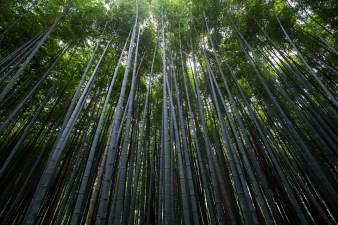 Trees resources