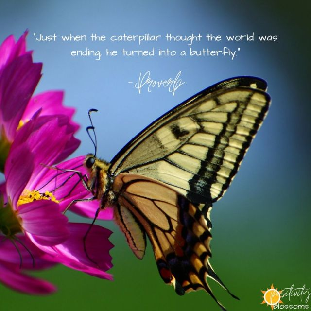 """Positive Quote #104: """"Just when the caterpillar thought the world was ending, he turned into a butterfly."""" - Proverb"""