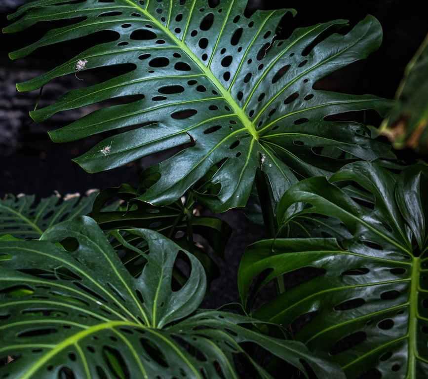 close up photo of dark green plants