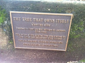 The Tree That Owns Itself in Athens, GA