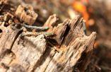 Überlebende des Winters - die Ameisen sind an dem Platz schon im vierten Frühjahr.
