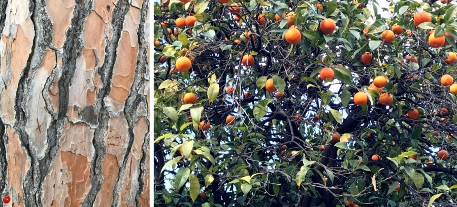 Giardino degli Aranci em Roma