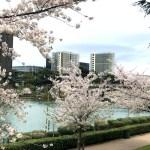 cerejeiras floridas no bairro EUR em Roma
