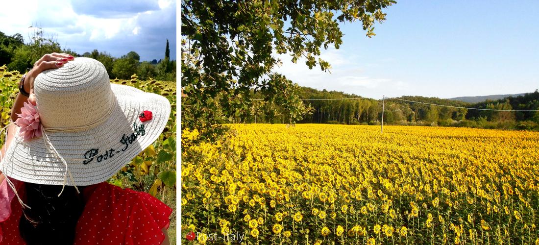 O esplendor dos campos de girassóis na Toscana
