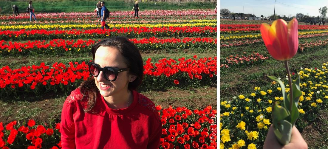 TuliPark. A versão romana do Keukenhof, o parque de tulipas na Holanda