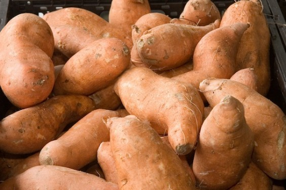 Sweet potatoes_FL_604