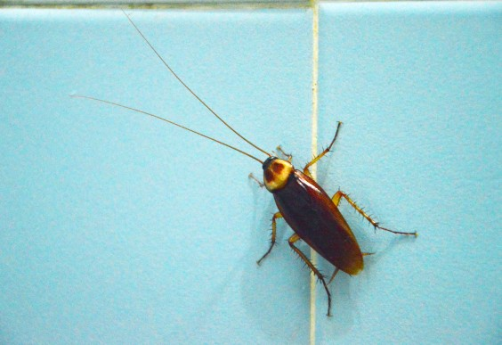 Household Bugs Get Rid Of Bed Bugs And More