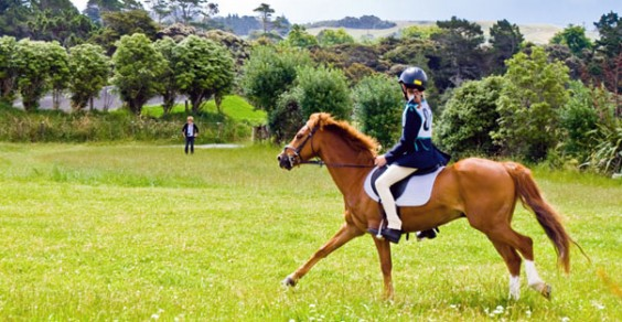 The Best-Selling Guide to Horsemanship There are No Problem Horses Only Problem Riders
