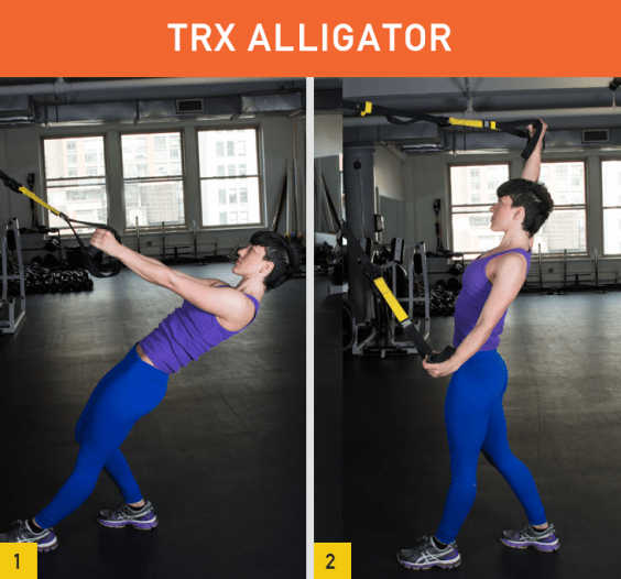 TRX Alligator