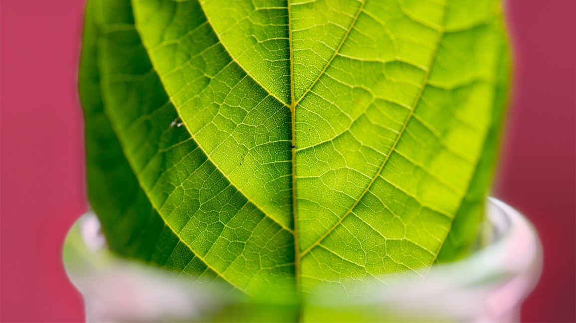 how to use kratom for depression