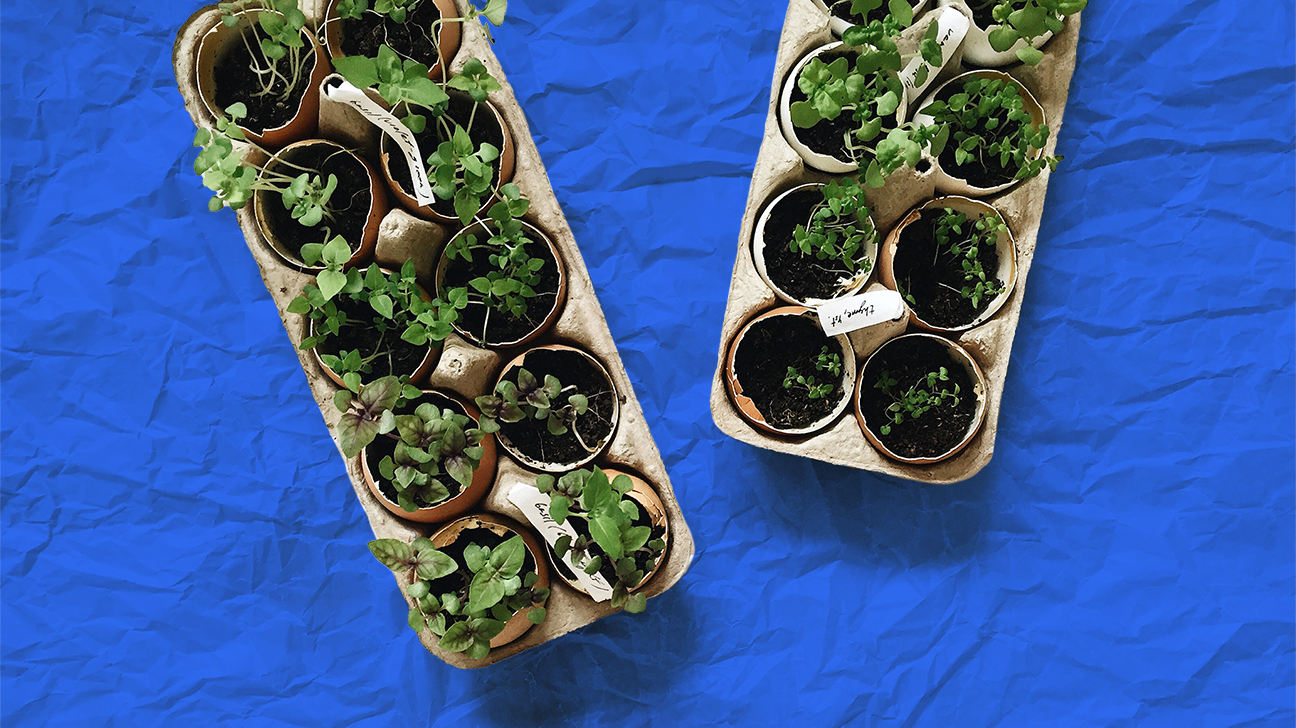 Image of: Growing Vegetables Indoors 8 Veggies You Could Even Grow In A Condo