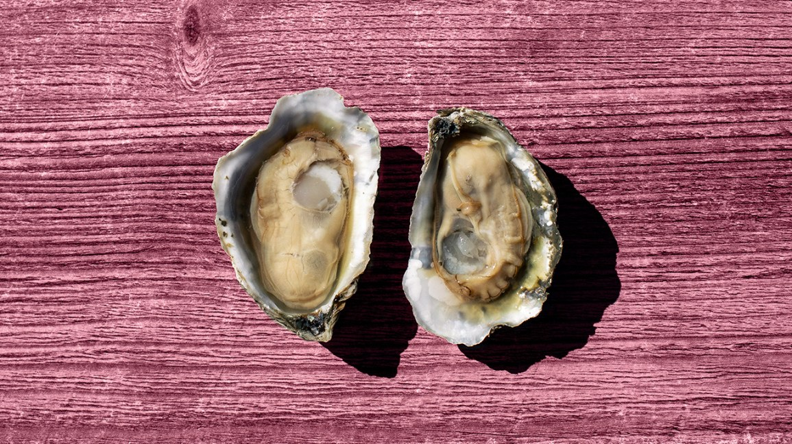 raw oysters full of manganese header