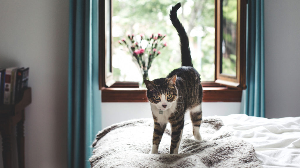 Cats and Asthma: Causes, Symptoms, and Treatments