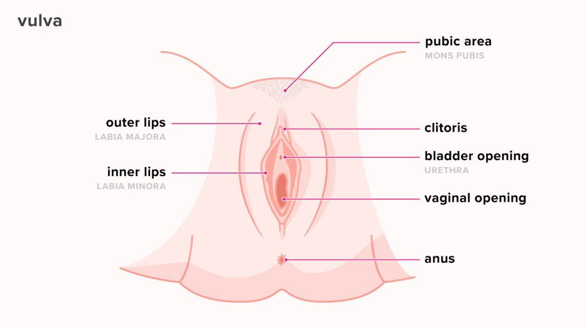 what does the inside of a vagina look like