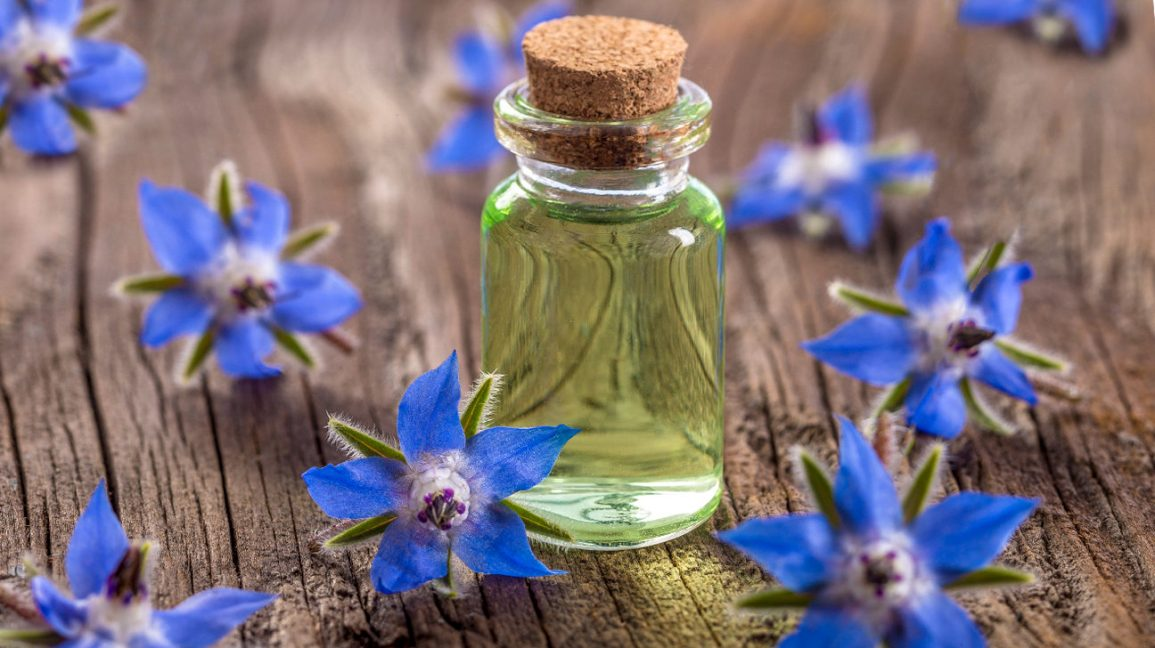 Borage Oil: Benefits, Uses, and Side Effects