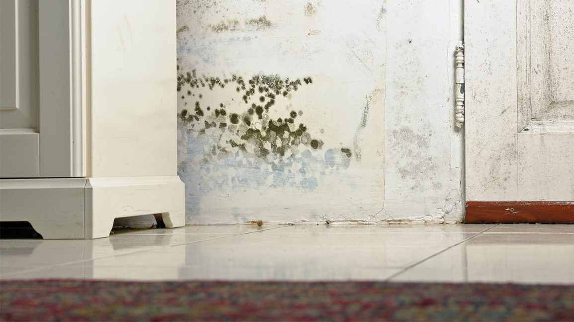 Can Black Mold Kill You? Fortunately, Probably Not