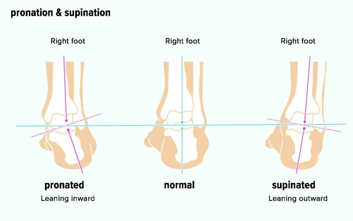 supination, pronation, foot, ankle