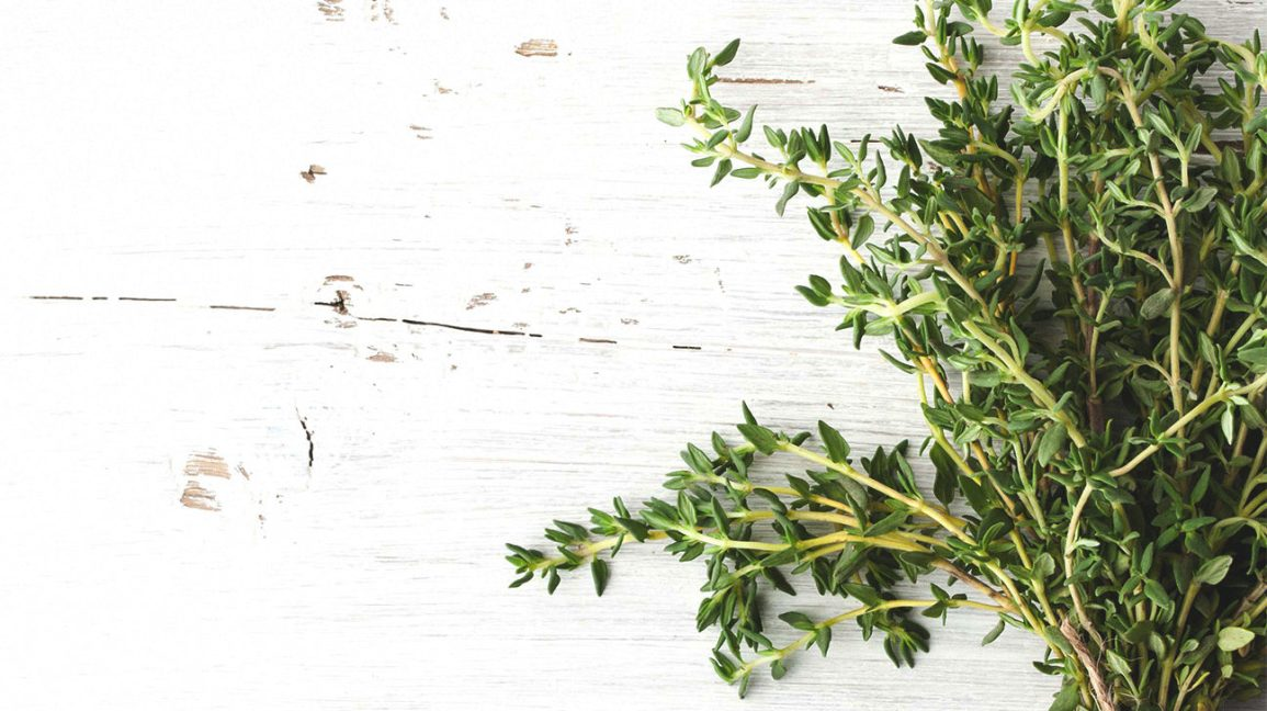 green herb that thyme oil comes from