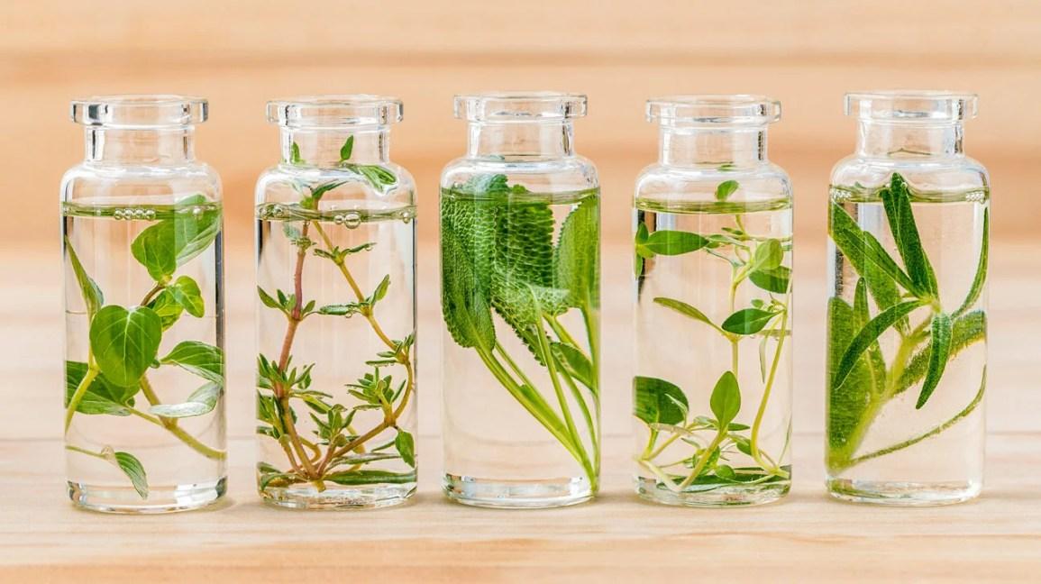 Ervas e óleos para repelir aranhas