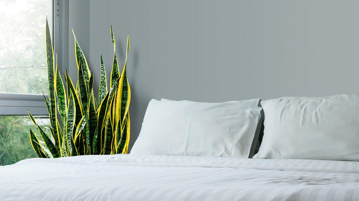 Benefits Of Snake Plant Plus Types Cautions And How To Grow