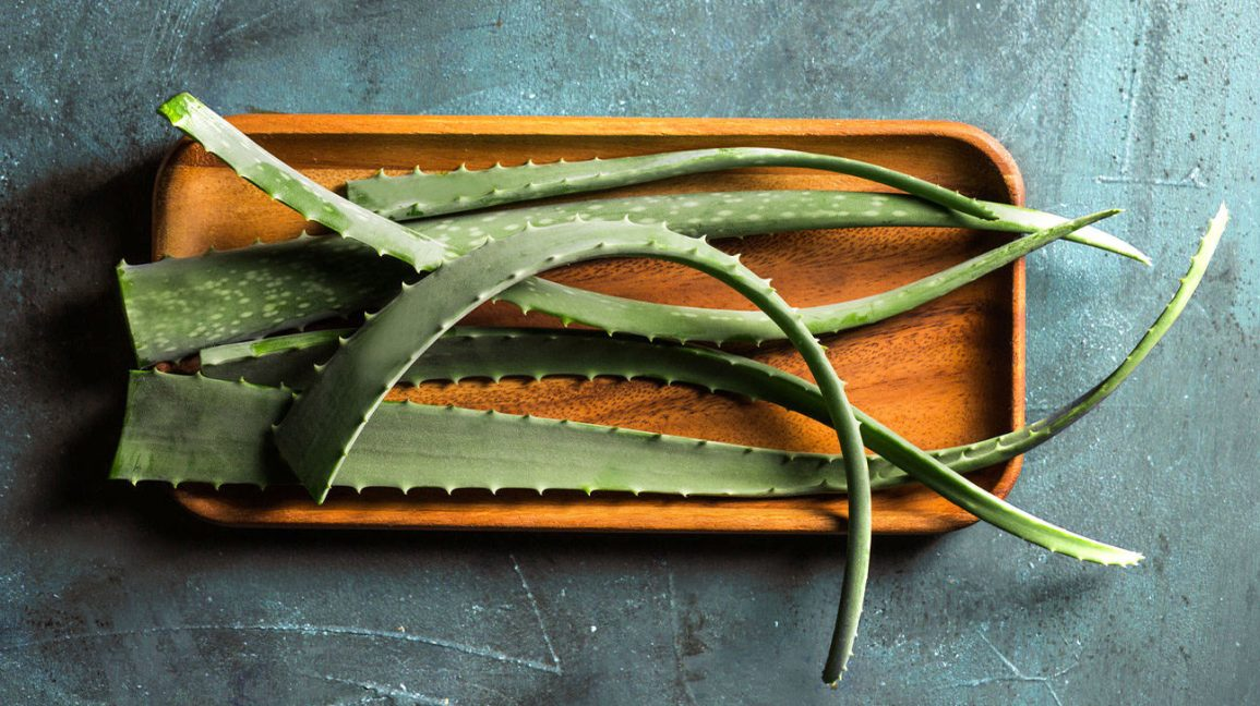 Aloe vera leaves on a tray