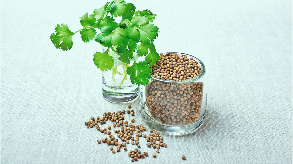Coriander leaves (cilantro) and seeds