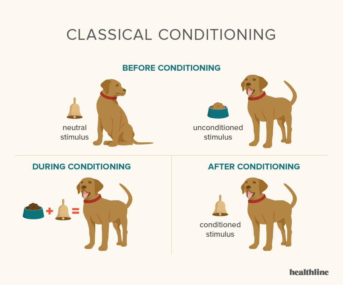 classical conditioning, Pavlov's dog