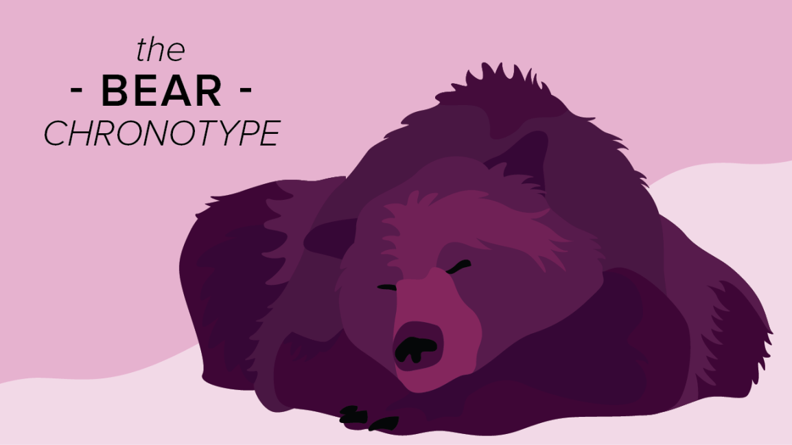 bear chronotype