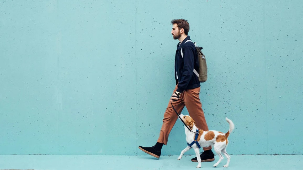 A man walking properly with good posture, with his dog on a leash beside him.