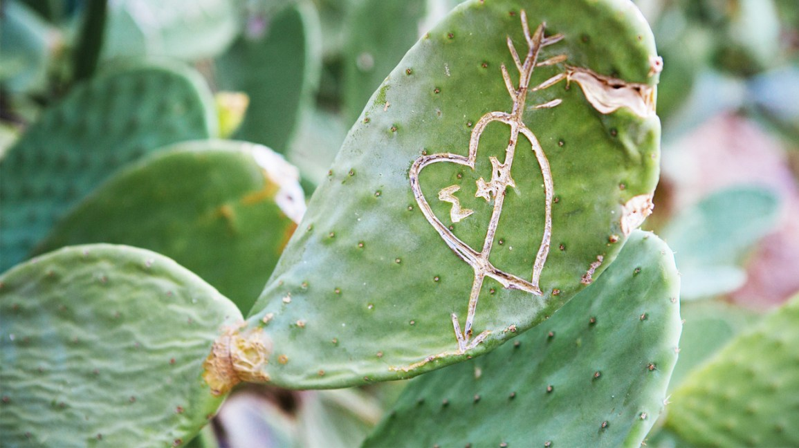 "cactus leaf that has a heart and arrow carved into it; ""E + A"" is carved into the inside of the heart"