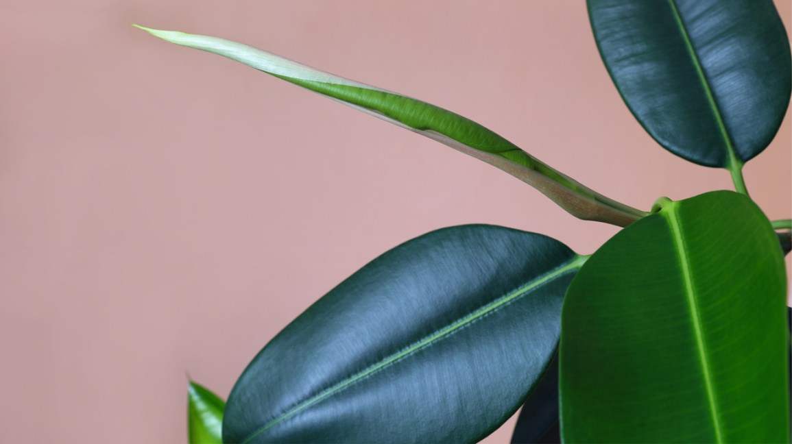 Humidifying Plants 12 Houseplants For Dry Indoor Air
