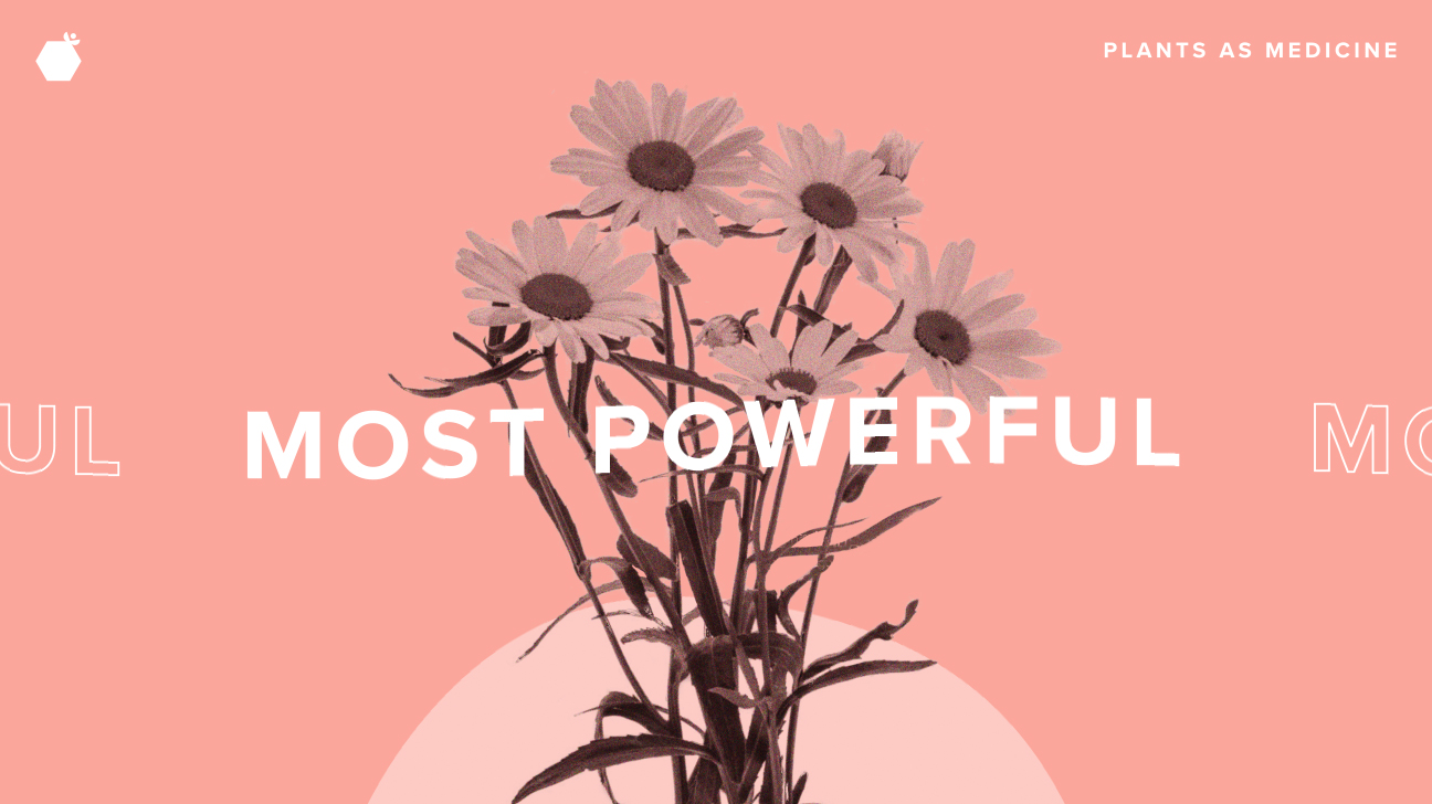 9 Most Powerful Medicinal Plants And Herbs Backed By Science