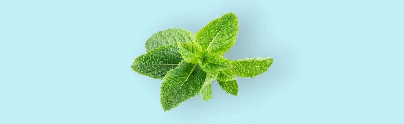Upset Stomach: 7 Natural Remedies