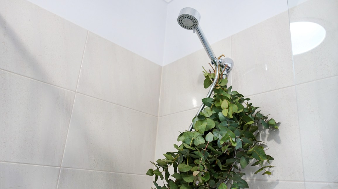 How To Get Eucalyptus In The Shower With Or Without Branches