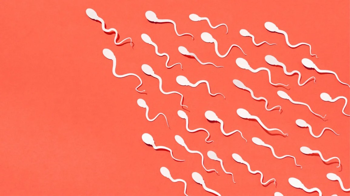 editorial image of about two dozen white sperm shapes swimming in the same direction against a solid orange background