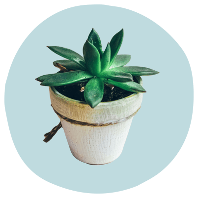 5 Easy Houseplants That Double As Self Care Reminders