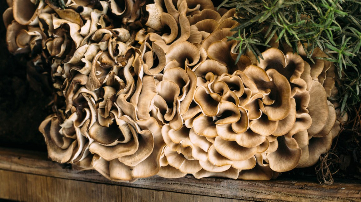 3 Edible Wild Mushrooms And 5 To Avoid