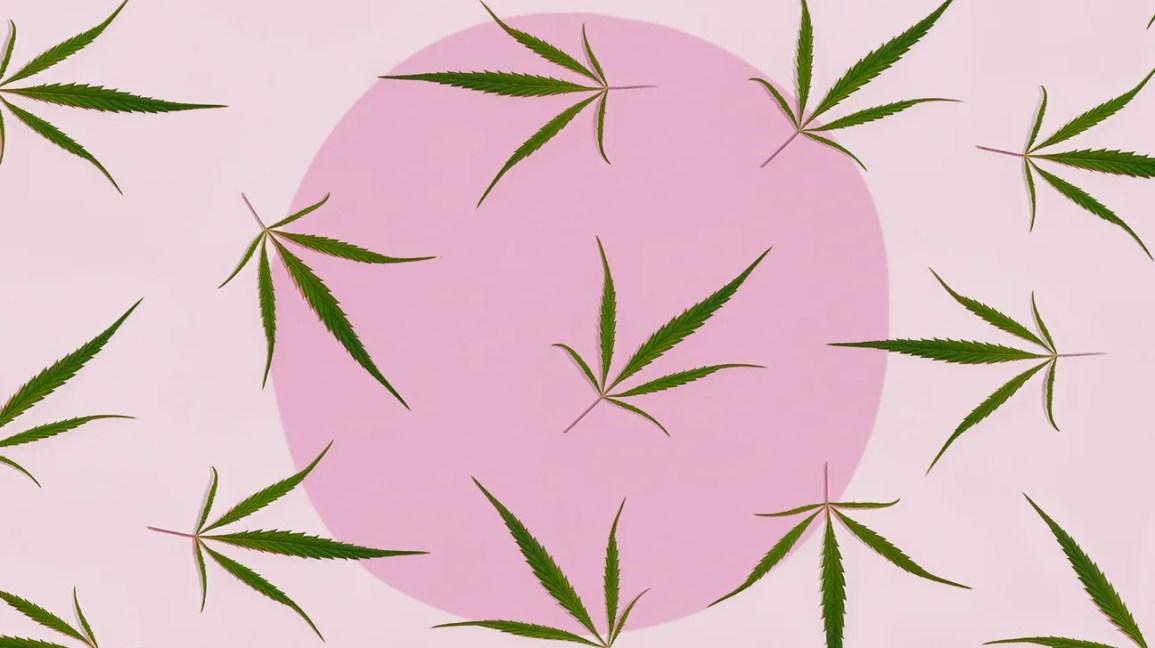 Folhas de cânhamo CBD