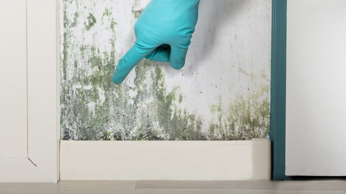 A gloved hand points to spots of greenish mold on an indoor wall.