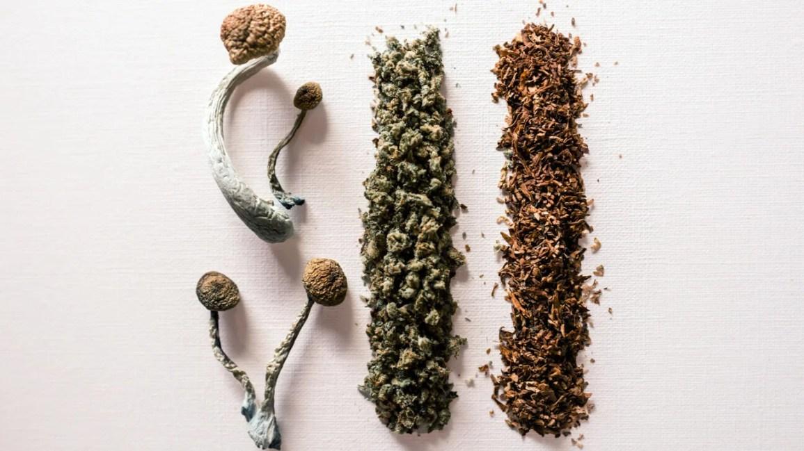 cogumelos, cannabis e tabaco alinhados juntos