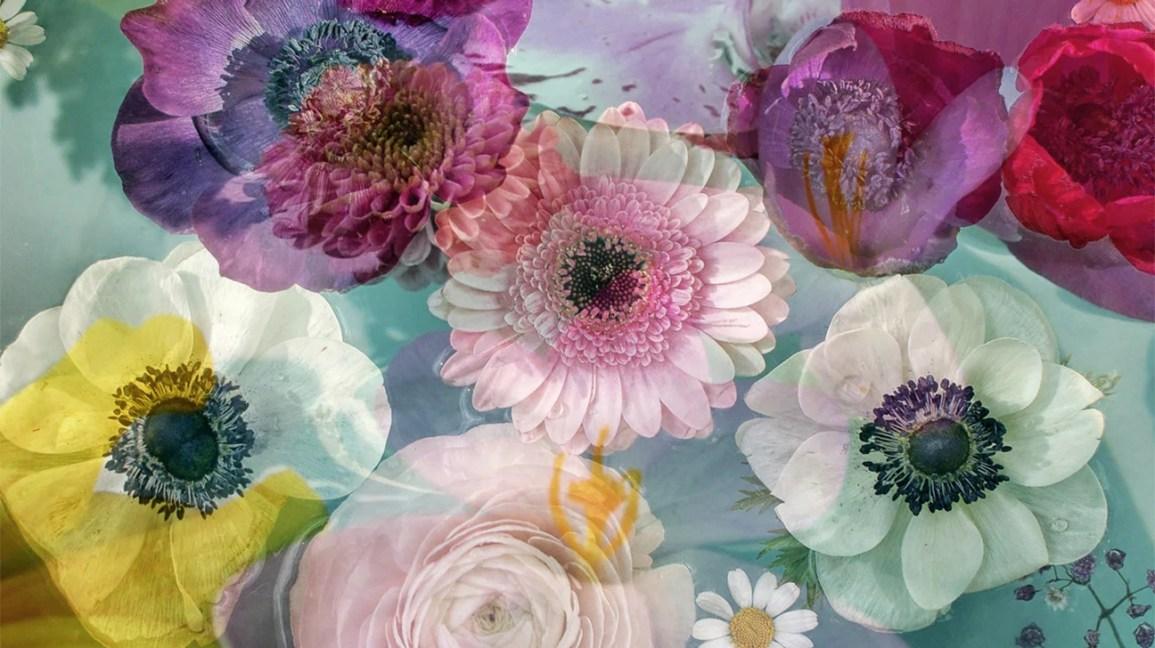 essenze floreali