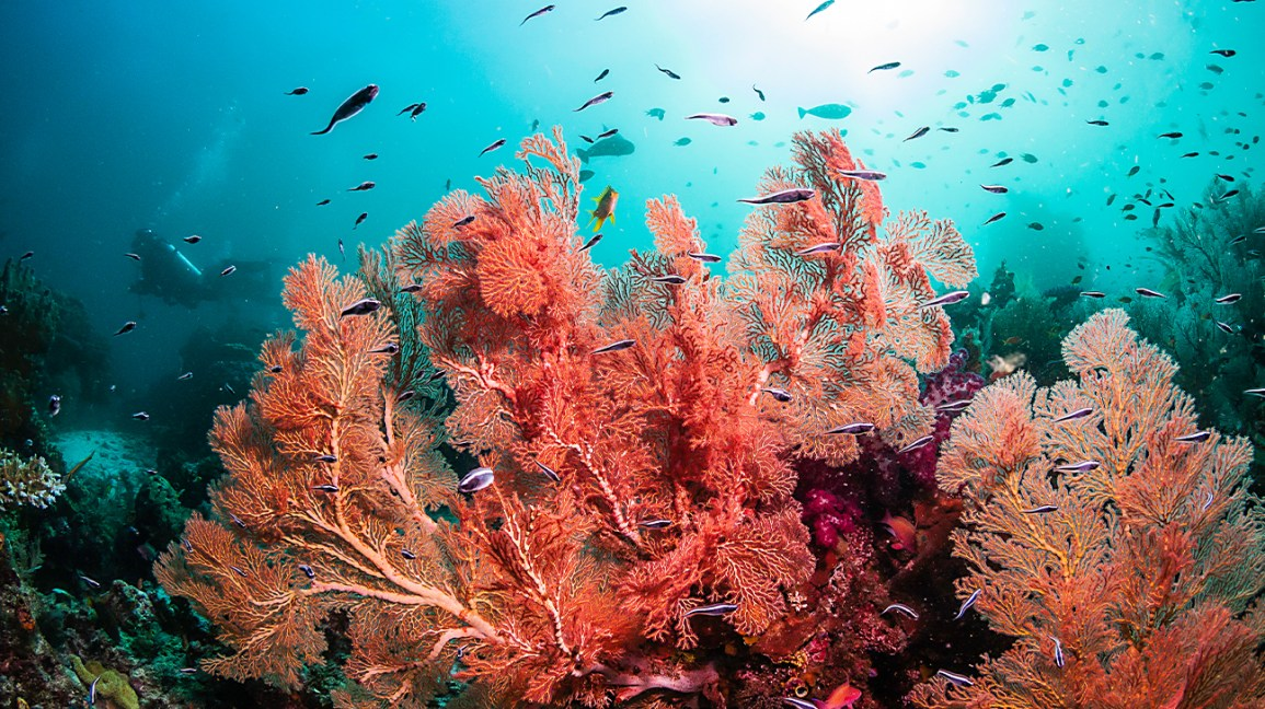 coral reef with red coral and fish