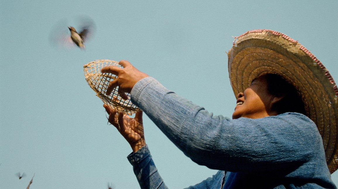 A woman releases a bird into the air.
