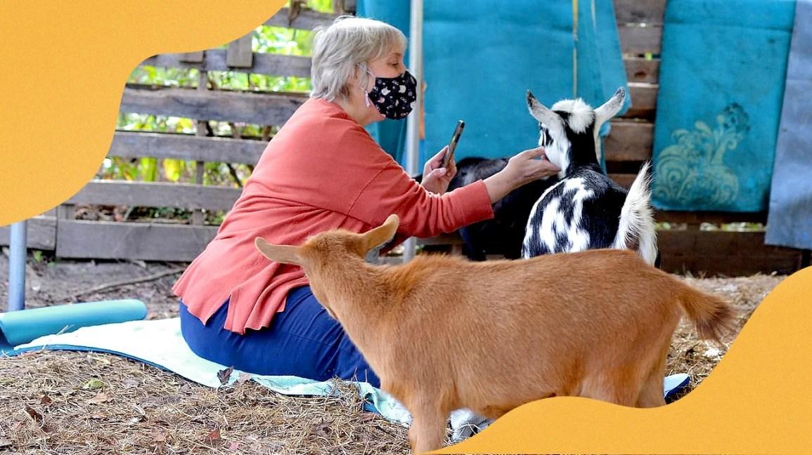 Julie Greenwood tira uma foto de Cookie, uma cabra anã nigeriana salpicada de preto e branco, durante uma sessão de ioga de cabra para beneficiar a Fundação Nacional de Psoríase.