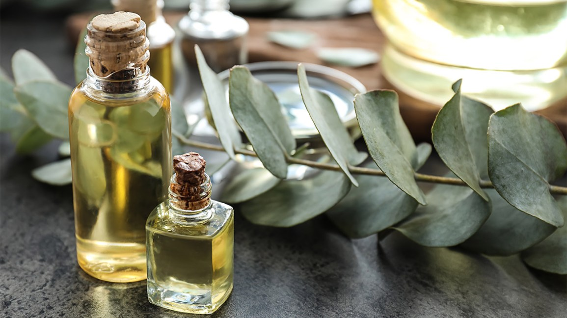 Eucalyptus oil next to eucalyptus plant