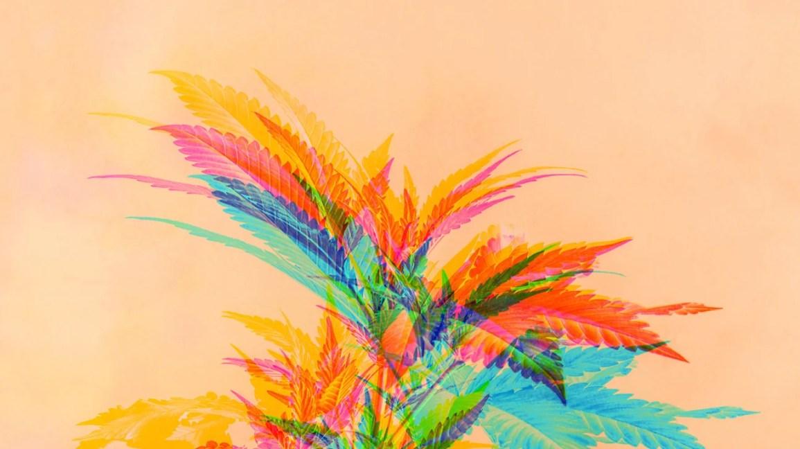 planta de cannabis através de filtro psicodélico