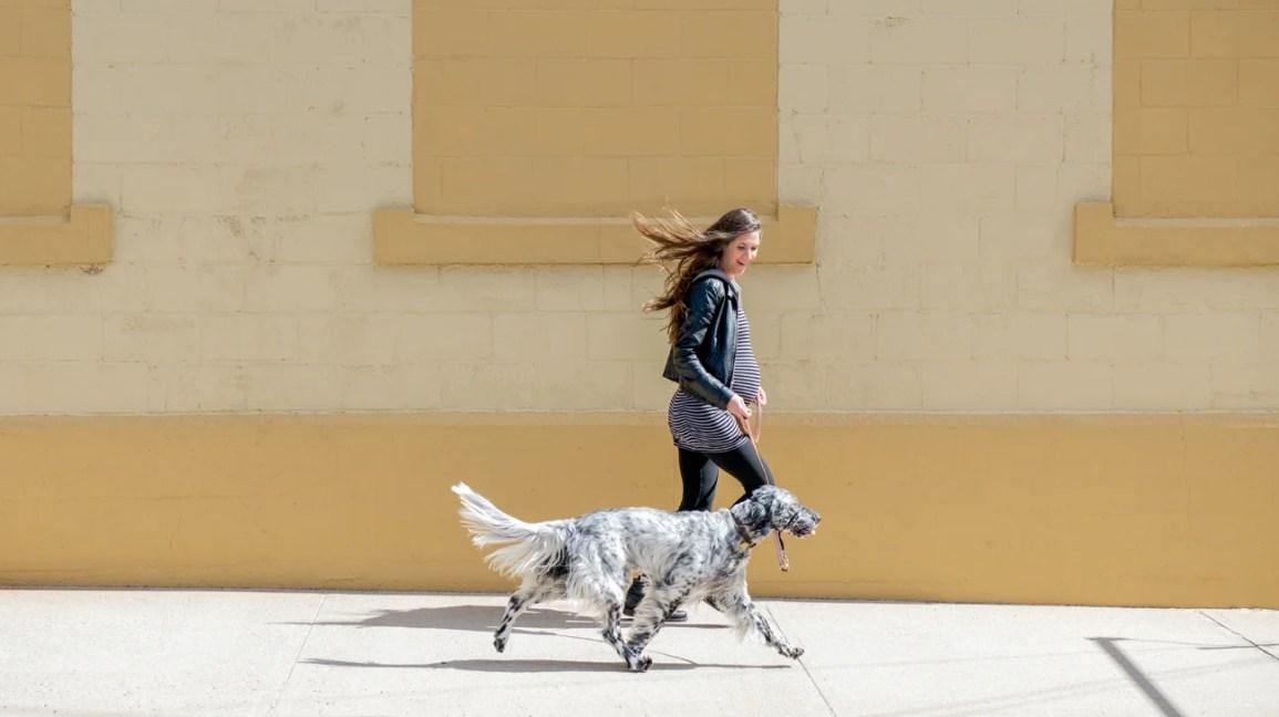 Hamile kişi yürüyen köpek