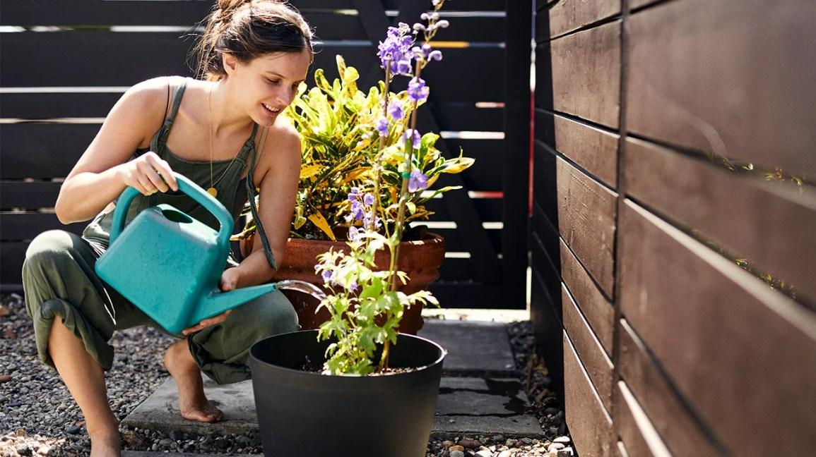 mulher regando flores da jarra