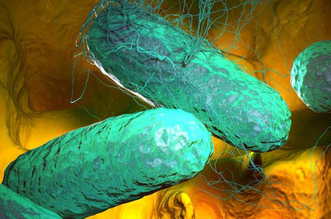 bakteri pemicu demam tifoid