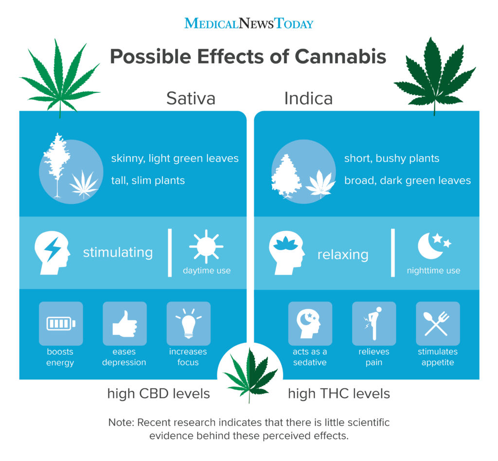 an infographic showing the diference effects of sativa and indica